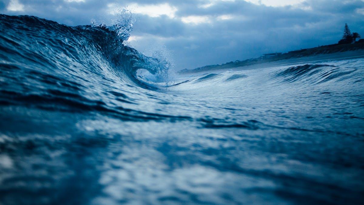 marine life ocean conservation the leonardo dicaprio foundation