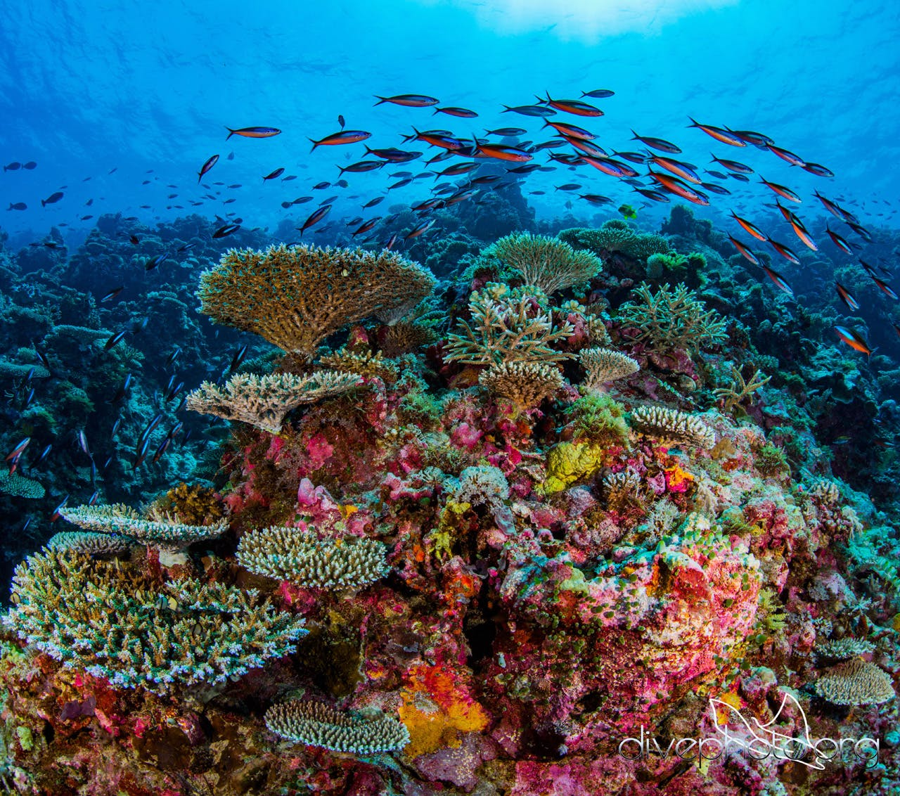 Reefscape: A Global Reef Survey To Build Better Satellites