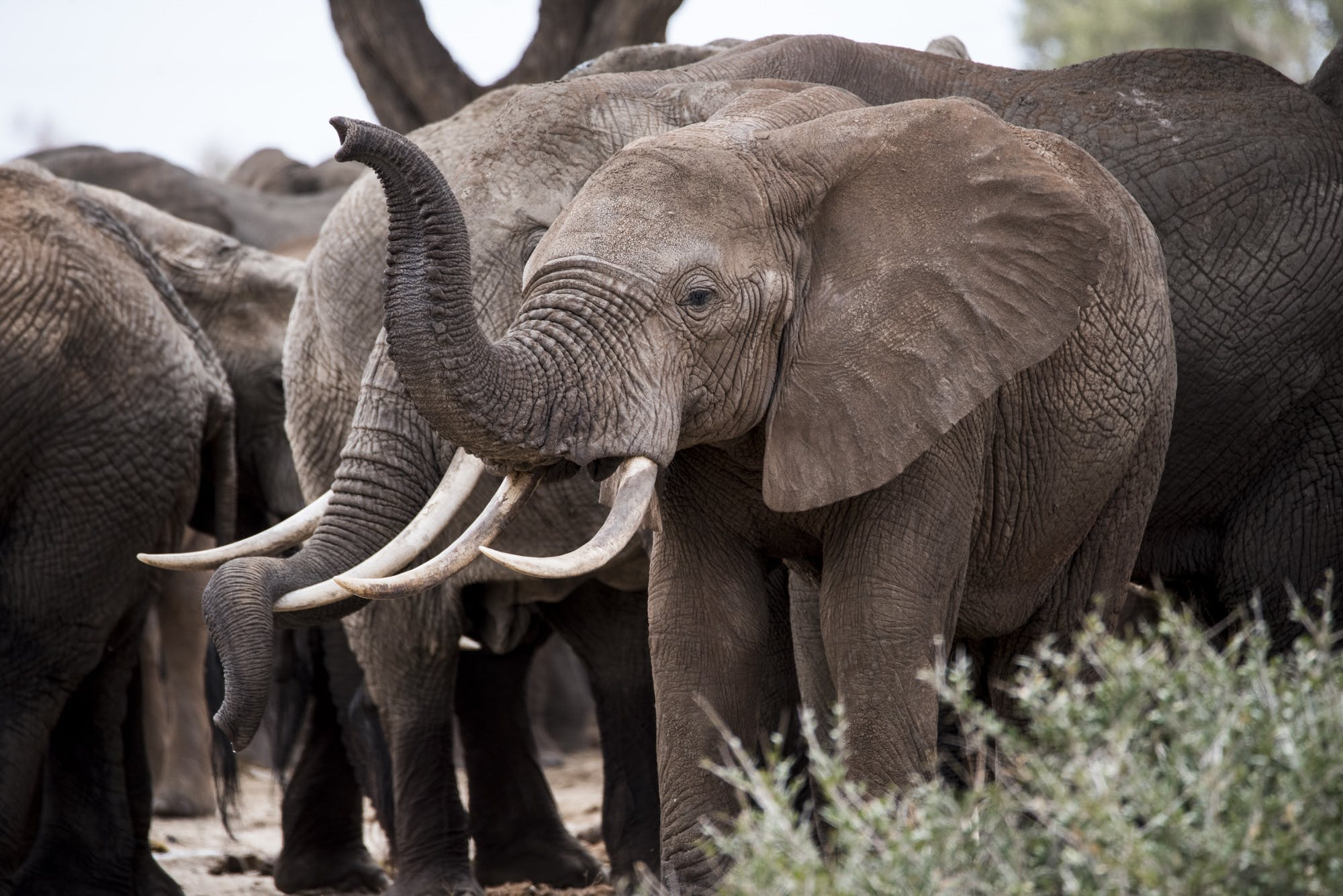 About Elephant Crisis Fund