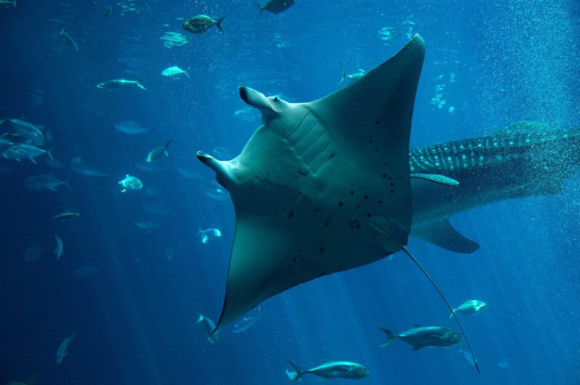 home shark conservation fund