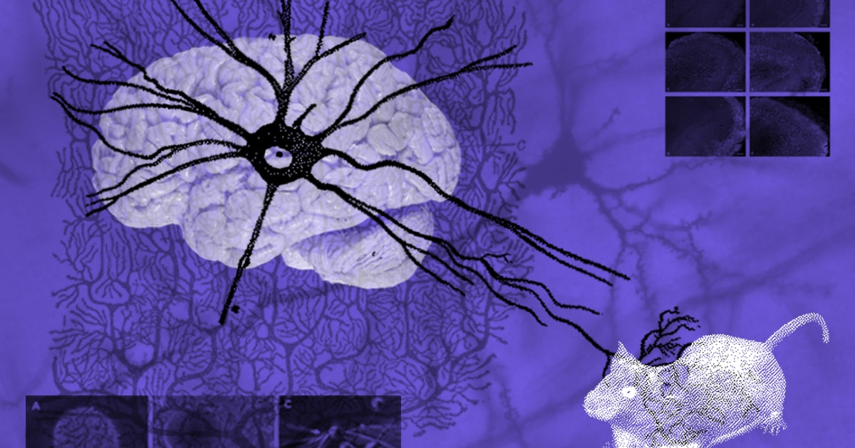 Neuroscientists proved the brain regenerates. Now they're trying to figure out how.