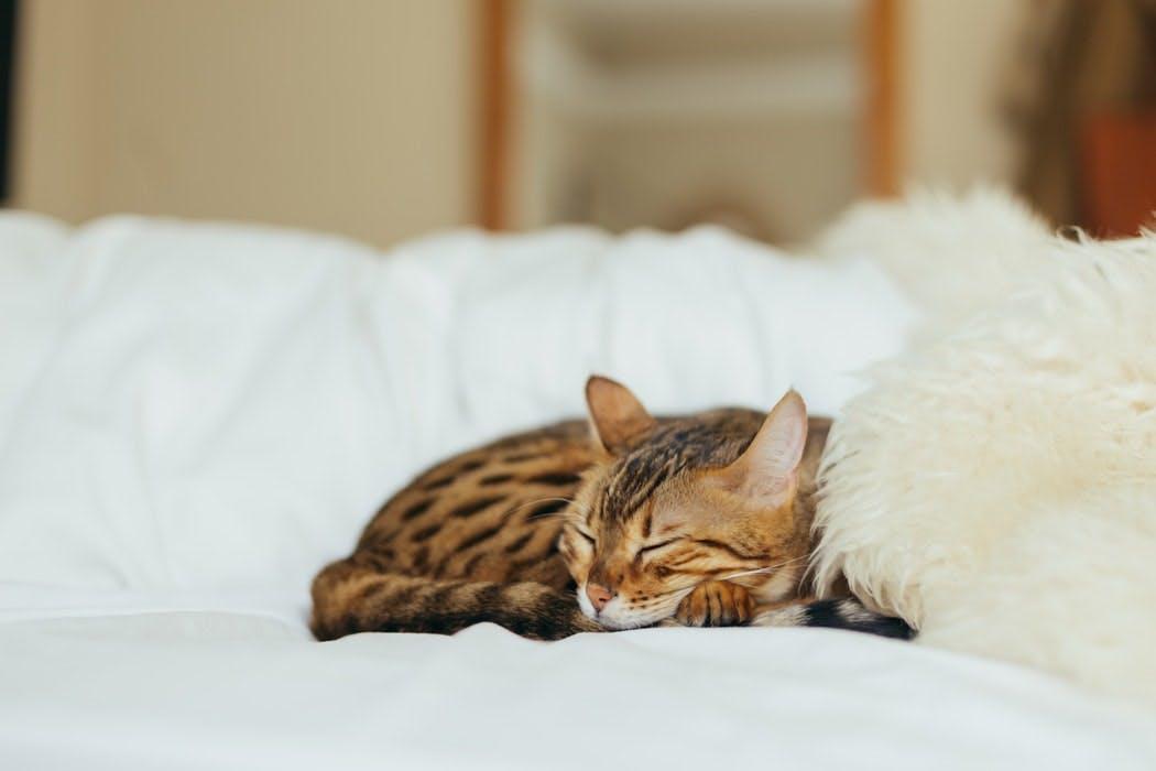 A photo of an orange kitten asleep on a bed.